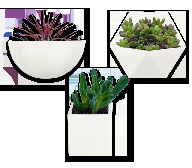 colectie mini plante